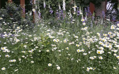 Gartentipps für den Sommer